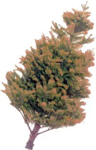 newsletter: recycle holiday tree